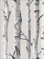 Birch Tree Peel And Stick Wallpaper NU1650 by Brewster Wallpaper for sale at Wallpapers To Go