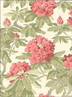 Bourlie Coral Wallpaper 994020 by Cole and Son Wallpaper for sale at Wallpapers To Go