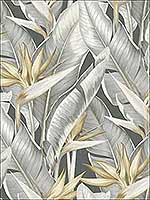 Arcadia Grey Banana Leaf Wallpaper PS40200 by Kenneth James Wallpaper for sale at Wallpapers To Go