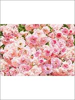 Rosa 8 Panel Wall Mural 8937 by Brewster Wallpaper for sale at Wallpapers To Go