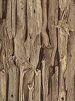 Olympic Brown Driftwood Wallpaper 2774473216 by Advantage Wallpaper for sale at Wallpapers To Go