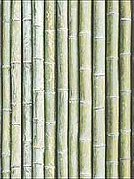 Bamboo Green Wallpaper G67941 by Patton Norwall Wallpaper for sale at Wallpapers To Go