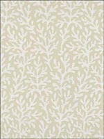 Sea Coral Bone Wallpaper 5004730 by Schumacher Wallpaper for sale at Wallpapers To Go