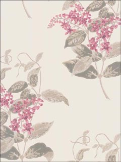 Madras Violet Pink Wallpaper 10012058 by Cole and Son Wallpaper for sale at Wallpapers To Go